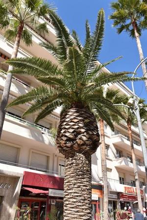 palmier_avenue_gambetta_portrait.jpg