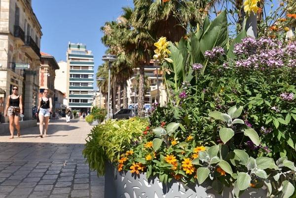 jardinieres_clotis.jpg
