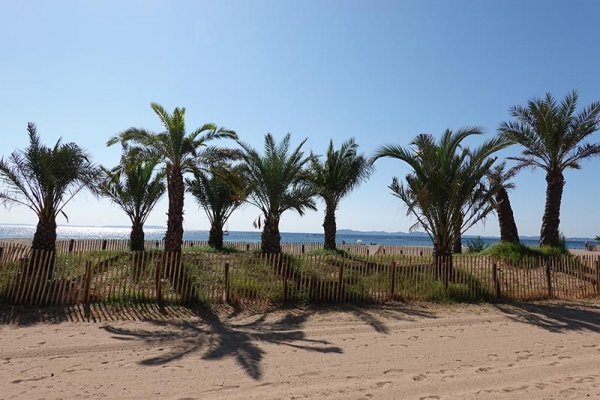 palmiers_sur_plage_ayguade.jpg