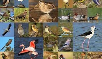oiseaux_agenda.jpg