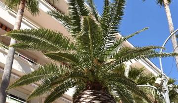 palmier_avenue_gambetta.jpg